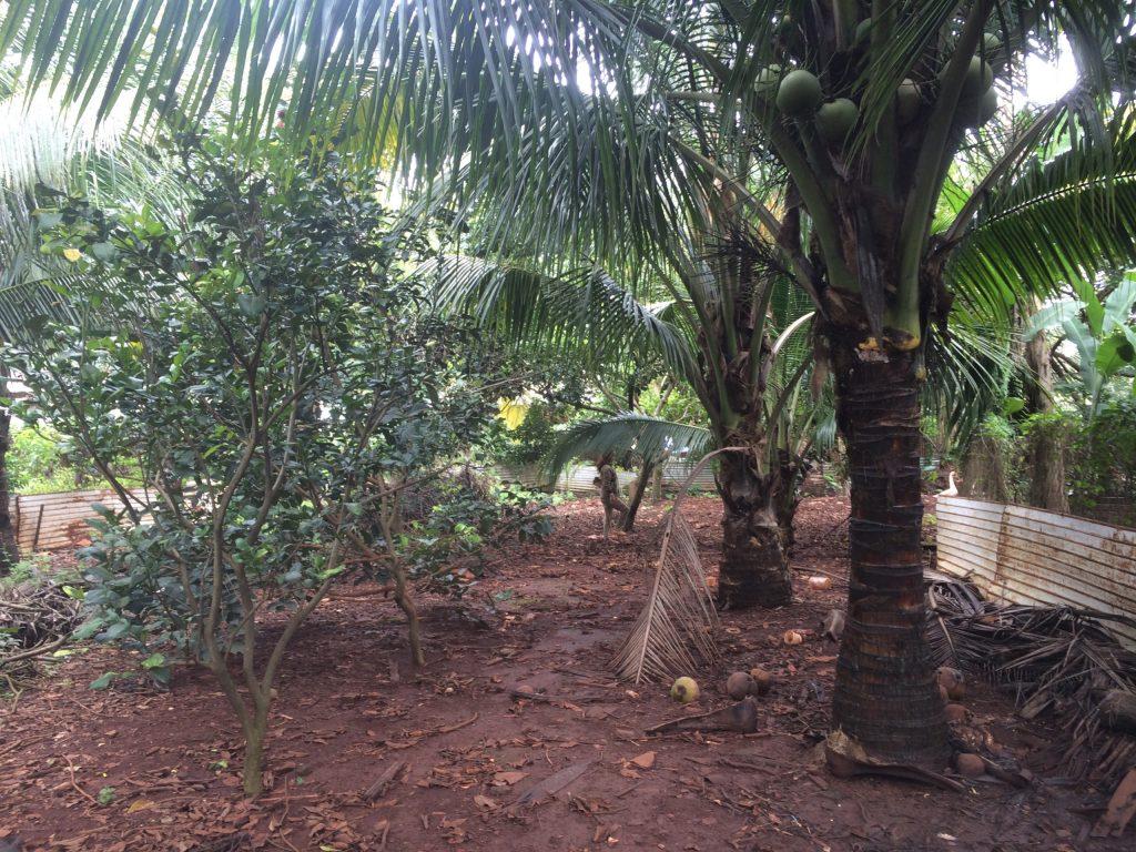 Bán đất nền xã Thuận Phú