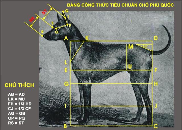 Trại chó Phú Quốc - Tất tần tật thông tin về chó Phú Quốc từ A đến Z 1