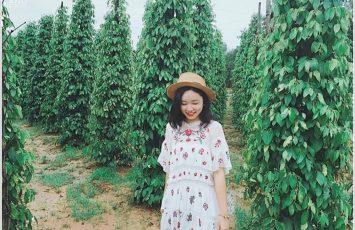 Vườn tiêu Phú Quốc 210